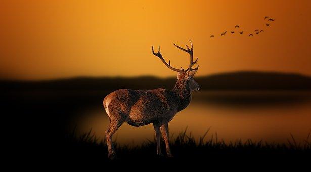 Odszkodowanie za szkody łowieckie w uprawach i płodach rolnych lub przy polowaniu