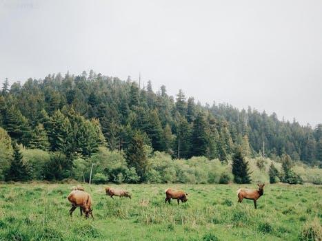 Dzierżawa obwodu łowieckiego leśnego lub polnego